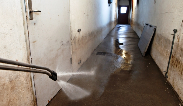 After delivery to the slaughterhouse the stable is flushed with high-pressure.