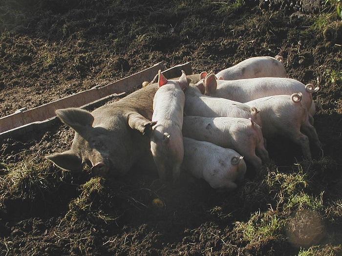 Myndighederne havde en handlingsplan i 2012 mod spredning af MRSA. Den skulle bl.a. sikre MRSA-frie handelsveje, men den blev skrottet i stilhed, fordi den ville være for dyr for bønderne. Den beslutning skete uden at vurdere de økonomiske og helbredsmæssige konsekvenser for danskerne.